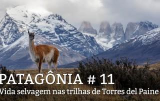 chamada-patagonia11