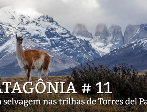 Patagonia, dia 11: Segundo dia atrás dos pumas