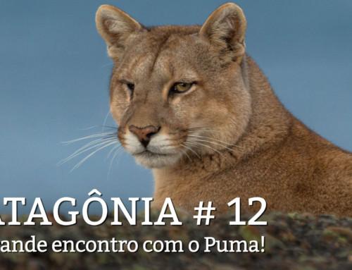 Patagonia, dia 13: O puma deu as caras