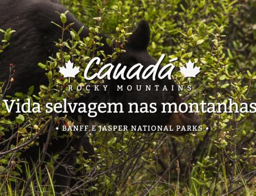 Em busca dos ursos canadenses!