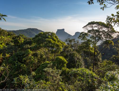 Onde fotografar na Floresta da Tijuca? Meus spots preferidos!